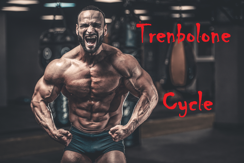 trenbolone-cycle